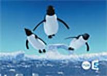 Jingles de Noël «pingouins» (F5)